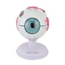 Anatomiemodel oog, 6-delig, groot